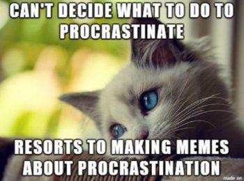 making memes to procrastinate